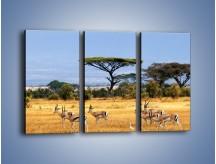 Obraz na płótnie – Antylopy w słonecznej afryce – trzyczęściowy Z003W2