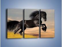 Obraz na płótnie – Czarny koń w galopie – trzyczęściowy Z008W2