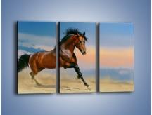 Obraz na płótnie – Brązowy koń na pustyni – trzyczęściowy Z011W2