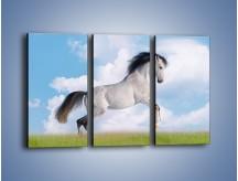 Obraz na płótnie – Białe obłoki i koń – trzyczęściowy Z019W2