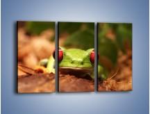 Obraz na płótnie – Bystre oczka małej żabki – trzyczęściowy Z023W2