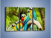 Obraz na płótnie – Kolorowe papugi w szeregu – trzyczęściowy Z029W2