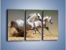 Obraz na płótnie – Białe konie w pustynnym galopie – trzyczęściowy Z055W2