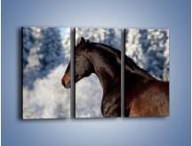 Obraz na płótnie – Brązowy ogier na zimowym spacerze – trzyczęściowy Z056W2