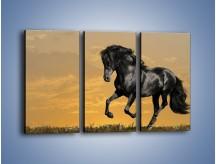 Obraz na płótnie – Bieg z koniem po polanie – trzyczęściowy Z057W2
