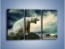 Obraz na płótnie – Donośny krzyk polarnego niedźwiedzia – trzyczęściowy Z114W2