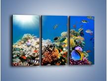 Obraz na płótnie – Fauna i kolorowi towarzysze – trzyczęściowy Z116W2