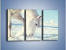 Obraz na płótnie – Arab w śnieżnym puchu – trzyczęściowy Z144W2