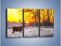 Obraz na płótnie – Jeleń o zachodzie słońca – trzyczęściowy Z164W2