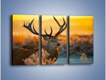 Obraz na płótnie – Ciężkie poroże jelenia – trzyczęściowy Z165W2