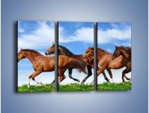 Obraz na płótnie – Galopujące stado brązowych koni – trzyczęściowy Z172W2