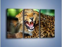 Obraz na płótnie – Jaguar z pazurem – trzyczęściowy Z184W2