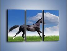 Obraz na płótnie – Dziki koń w biegu – trzyczęściowy Z194W2