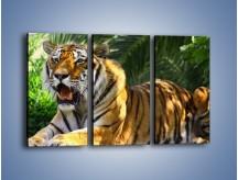 Obraz na płótnie – Cała duma tygrysa – trzyczęściowy Z199W2