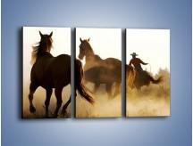 Obraz na płótnie – Cowboy wśród koni – trzyczęściowy Z206W2