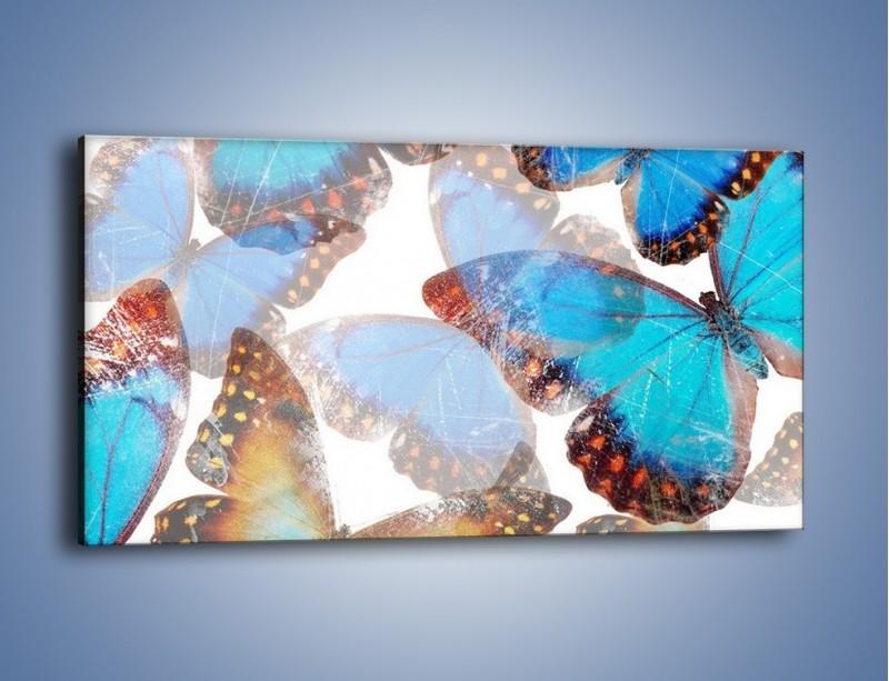 Obraz na płótnie – Motyl w niebieskim kolorze – jednoczęściowy panoramiczny GR403