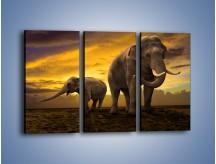 Obraz na płótnie – Ciekawość małego słonika – trzyczęściowy Z212W2