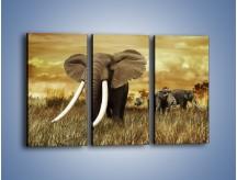 Obraz na płótnie – Drogocenne kły słonia – trzyczęściowy Z214W2