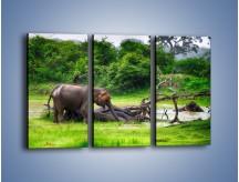 Obraz na płótnie – Kąpiel ze słoniem – trzyczęściowy Z216W2