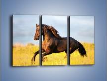Obraz na płótnie – Dziki koń i jego mięśnie – trzyczęściowy Z232W2