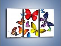 Obraz na płótnie – Kolorowo wśród motyli – trzyczęściowy Z236W2