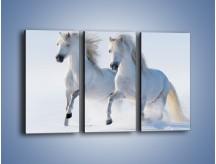 Obraz na płótnie – Gonitwa konna w bieli – trzyczęściowy Z240W2
