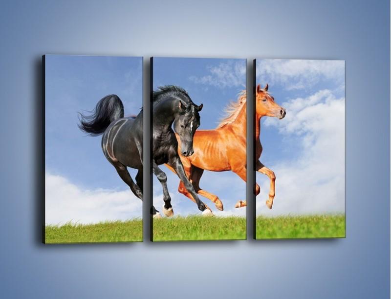 Obraz na płótnie – Czarny rudy i koń – trzyczęściowy Z241W2