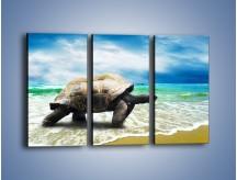 Obraz na płótnie – Jak tu nie kochać żółwi – trzyczęściowy Z251W2