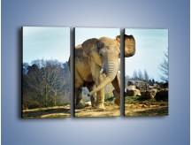 Obraz na płótnie – Ciężkie życie słonia – trzyczęściowy Z273W2