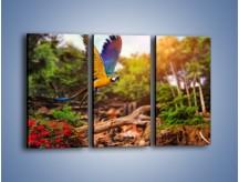 Obraz na płótnie – Kolorowa papuga w locie – trzyczęściowy Z280W2
