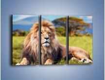 Obraz na płótnie – Dostojny lew na sawannie – trzyczęściowy Z282W2