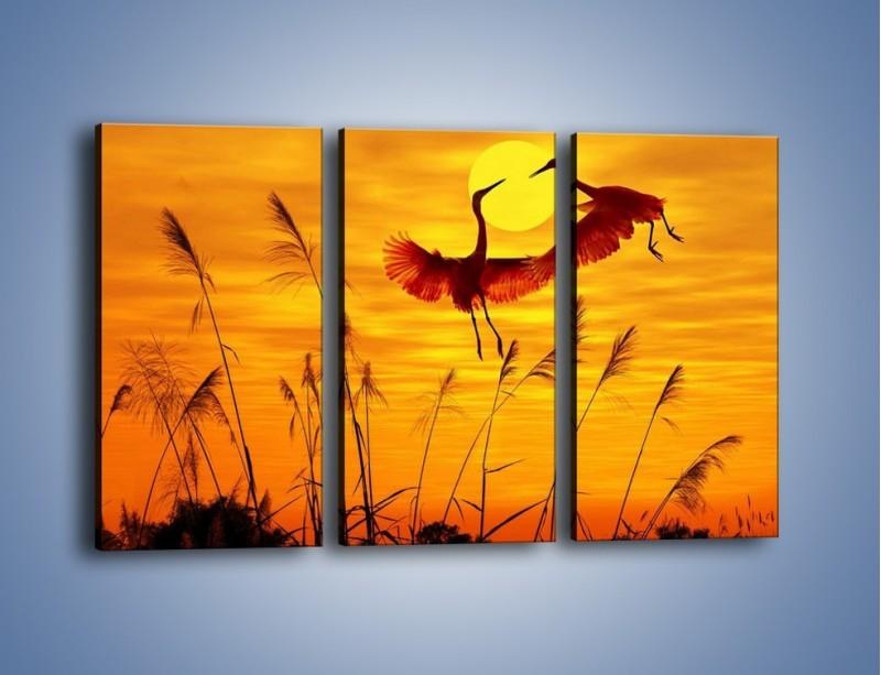 Obraz na płótnie – Czaple i zachód słońca – trzyczęściowy Z302W2