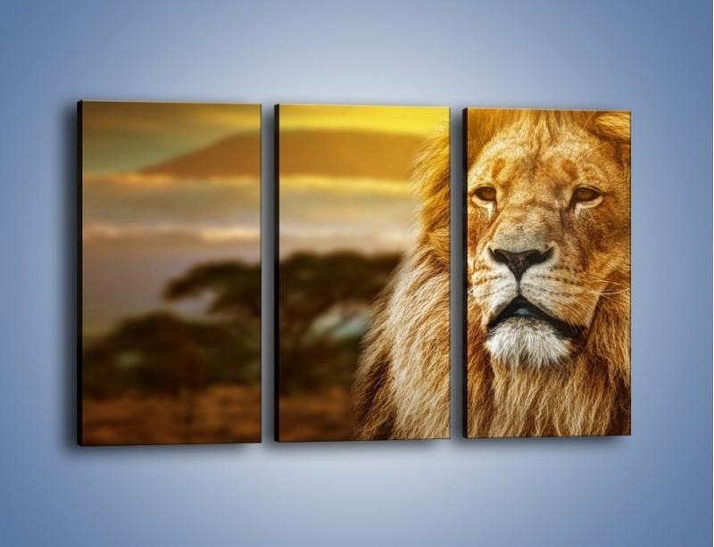 Obraz na płótnie – Dojrzały wiek lwa – trzyczęściowy Z303W2