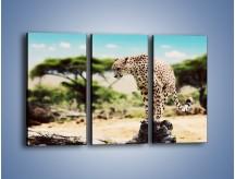 Obraz na płótnie – Cała zwinność geparda – trzyczęściowy Z315W2