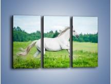 Obraz na płótnie – Biały koń i leśna polana – trzyczęściowy Z317W2