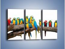 Obraz na płótnie – Kolorowe stado papug – trzyczęściowy Z326W2