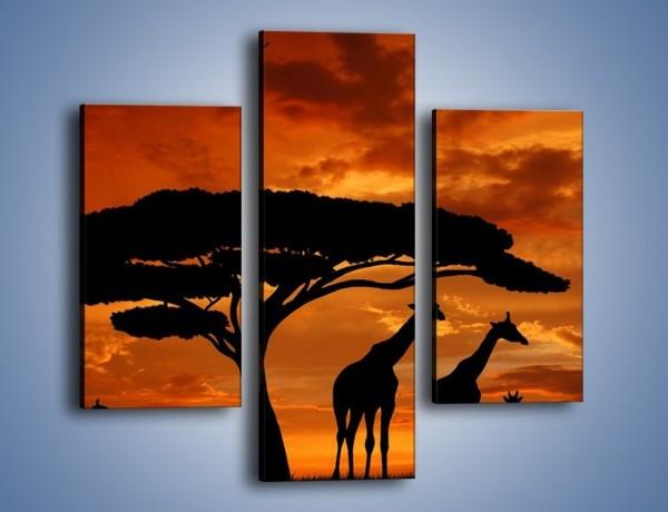 Obraz na płótnie – Żyrafy wieczorową porą – trzyczęściowy GR266W3