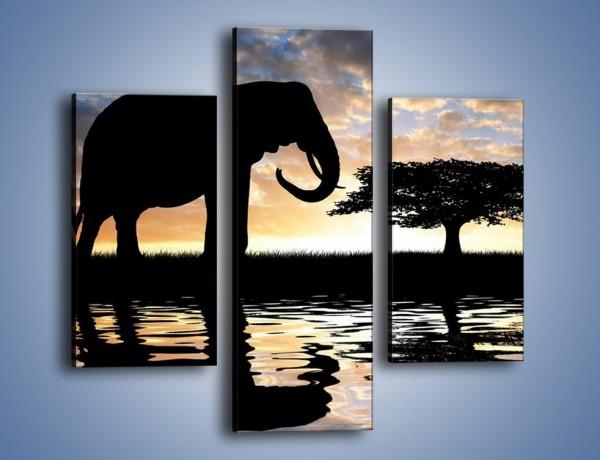 Obraz na płótnie – Samotność wśród słoni – trzyczęściowy GR317W3