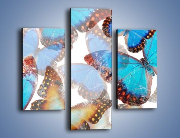 Obraz na płótnie – Motyl w niebieskim kolorze – trzyczęściowy GR403W3