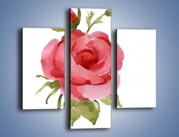 Obraz na płótnie – Róża nie do końca rozwinięta – trzyczęściowy GR501W3