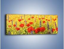 Obraz na płótnie – Cała łąka maków – jednoczęściowy panoramiczny GR480