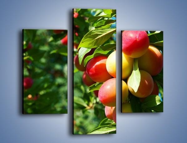 Obraz na płótnie – Drzewa pełne brzoskwiń – trzyczęściowy JN495W3