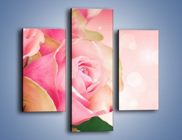 Obraz na płótnie – Różowa róża w świetle – trzyczęściowy K001W3