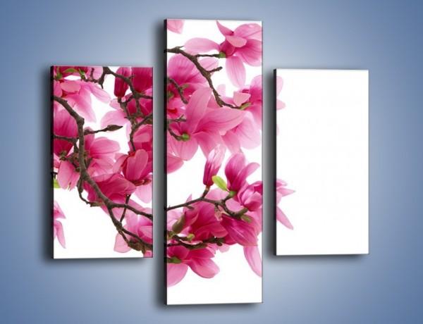 Obraz na płótnie – Kwiat wiśni na drzewie – trzyczęściowy K003W3