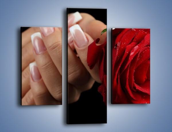 Obraz na płótnie – Kwiat róży w kobiecych dłoniach – trzyczęściowy K006W3