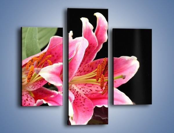 Obraz na płótnie – Rozwinięte lilie na czarnym tle – trzyczęściowy K007W3