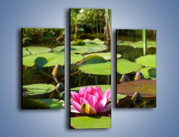 Obraz na płótnie – Ciemno-różowy nenufar na wodzie – trzyczęściowy K014W3