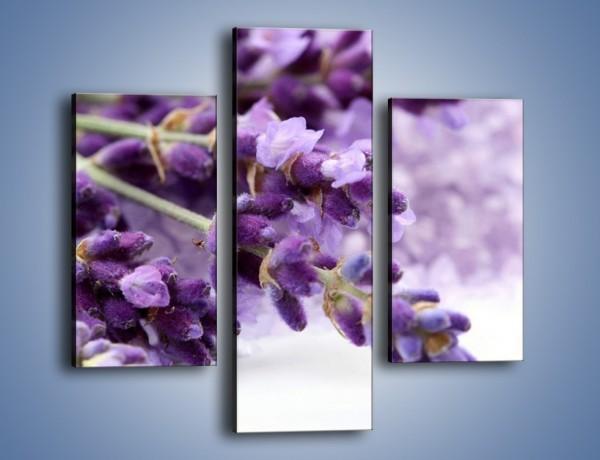 Obraz na płótnie – Kwiat łubinu zimą – trzyczęściowy K015W3