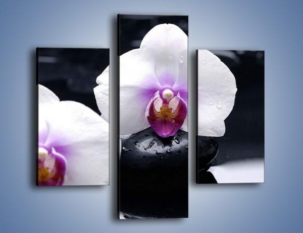 Obraz na płótnie – Główki białych storczyków – trzyczęściowy K024W3