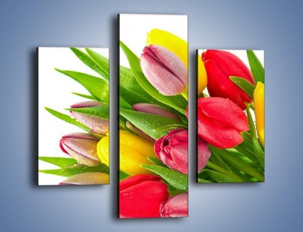 Obraz na płótnie – Kropelki wody na kolorowych tulipanach – trzyczęściowy K049W3